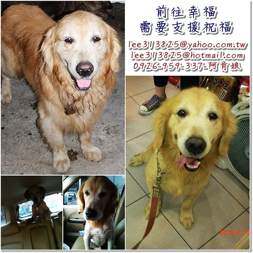「需要支援及護犬大使」從花蓮收容所救出的黃金獵犬simon弟弟,即將飛往紐約,幸福的最後一步需要您的協助,也需要護犬大使,更需要您的祝福與支援,隨手幫忙轉PO也是非常重要~謝謝您!20101006