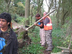 A student volunteer helps to make a fence stake