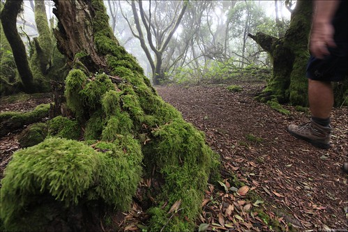 The El Hierro rainforest