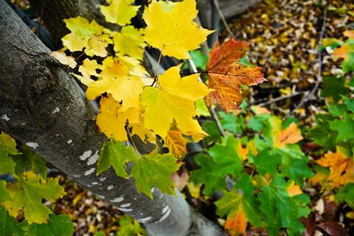 life as a leaf