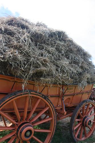Vintage hay waggon 1