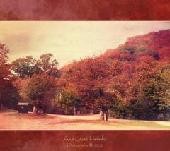 Autumn/Otoño (Ana López Heredia) Tags: autumn españa naturaleza color luz nature paisaje bamboo otoño wacom texturas cantabria pentablet konicaminolta saja dimagez5 konicaminoltadimagez5 ucieda bamboowacom analópezheredia