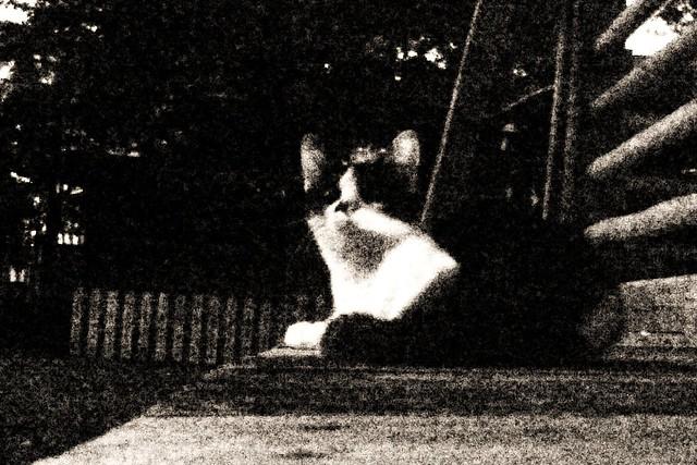 Today's Cat@2010-10-08