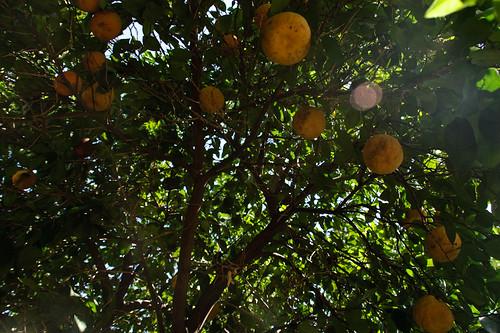 My garden 0086 October 05, 2010