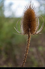 2010_10_06_0711 (John P Norton) Tags: plant flora manual f71 ef100400mmf4556lisusm 11250sec focallength400mm canoneos7d copyright2011johnnorton
