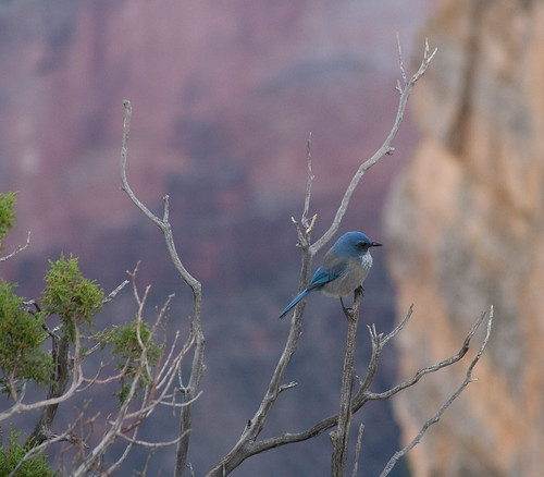 Beautiful Blue Bird