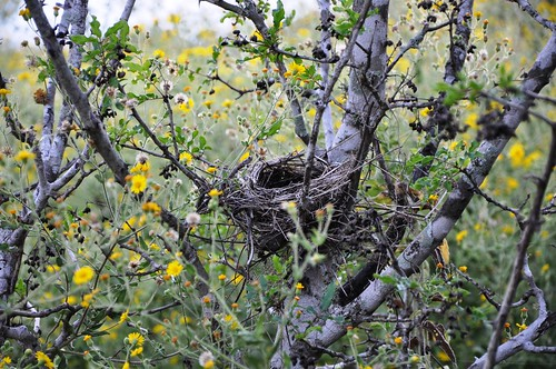 bird nest at Big Oaks