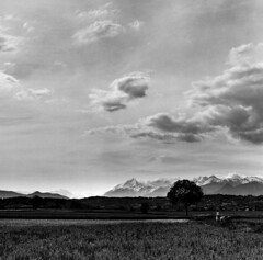 Fields, Alps & clouds (Fabrizio Zago - Photography & media) Tags: europa europe grass erba prato prati film scanned filmscanned filmscan scansione scansionepellicola analog analogue analogica analogico 120 6x6 pellicola120 120film mediumformat medioformato piemonte piemont piedmont mediumformatcamera mediumformatcameras tettineirotti tree trees albero alberi baum nature natura natural bumen countryside landschaft land campagna fields meadow meadows campo campi field farm fattoria hof wiese alps alpi alpen montagna montagne dojrone hasselblad hasselblad500cm 500cm italien italienisch piemontesisch biancoenero bianconero bw blackwhite blackandwhite schwarzweis grayscale bn kodaktmax100 blackwhitephotos italy italia