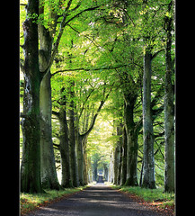 Drummond Drive (angus clyne) Tags: road trees light house fall forest drive scotland bright path perthshire avenue crieff beech drummond atumn lined colorphotoaward thesecretlifeoftrees