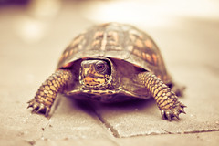 The tortoise and...the worm? (Jaime973) Tags: canon 50mm raw turtle tortoise wormseyeview hwevs fedhimsomegrapes foundhimstrollingaroundoutside somuchnicerthanthechipmunklol