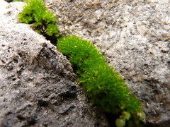 mosses between the stones