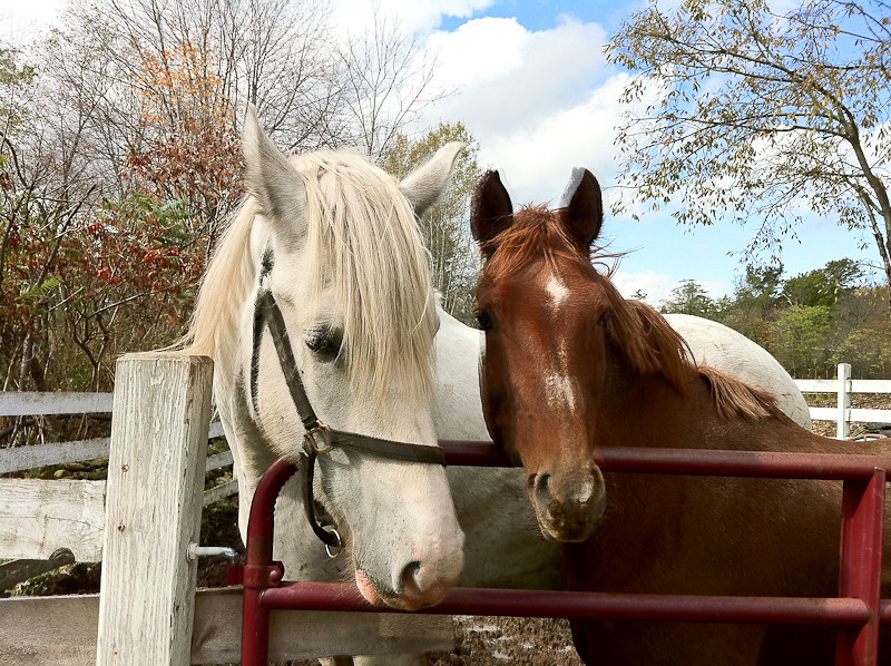 equine friends