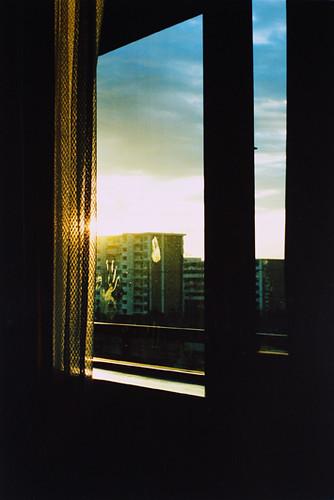 webdice_window