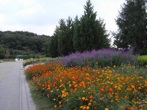 やまと花ごよみ2010@馬見丘陵公園-30