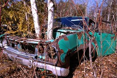 Tree Powered (Mr Perry) Tags: rust oxidation 1970s 1973 datsun 210 sigma1020mm autowreckers wreckingyard mcleans pentaxk10d