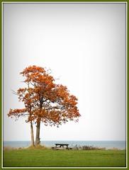 The Geneva Tree! (kuddlyteddybear2004) Tags: autumn ohio fall lakeerie lonetree genevastatepark