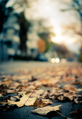 when the leaves come falling down (MeckiMac) Tags: road leica autumn fall leaves delete10 delete9 delete5 delete2 delete6 delete7 save3 delete8 delete3 delete delete4 save save2 m8