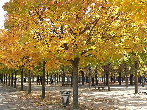 automne dans les tuileries.jpg