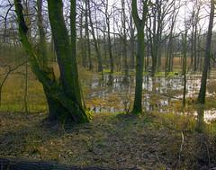 Rozlewisko 72 (Hejma (+/- 4400 faves and 1,4 milion views)) Tags: trees nature water cane landscape spring poland polska natura mirrorimage chiaroscuro woda backwater wiosna trzcina drzewa krajobraz odzwierciedlenia wiatocie rozlewisko