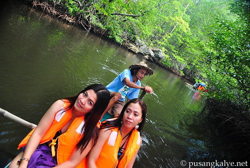 mangrove_forest_palawan