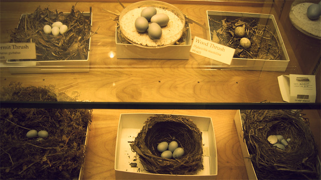 MoS, bird eggs