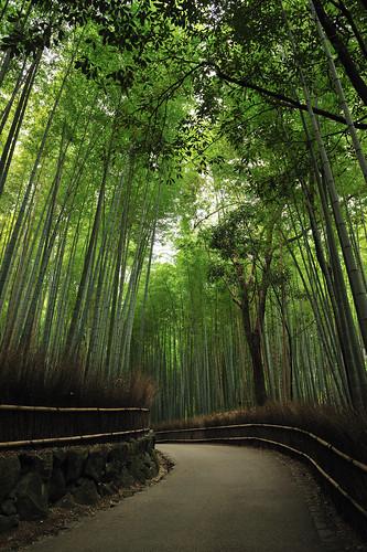 Bamboo Groove, Kyoto by Yuki--chan