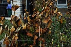 Copper Plants?