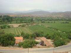 La vid gana la batalla contra la erosión de la tierra en Tarija
