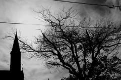 noir tree