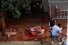 Opfer (Aschevogel) Tags: egypt cairo ägypten kairo misr eidaladha misir kahire kurbanbayrami opferfest