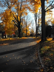 Hollywood cemetary (Photos by Michael Phillips) Tags: road park trees winter baby selfportrait snow macro tree water colors leaves cake wall skyline self canon virginia photo emily model nikon sticker shoot grafitti nikki photoshoot path cemetary sydney richmond chester presents hollywood potrait richmondvirginia chesterfield maymont keebler hollywoodcemetary dinwiddie maymontpark fugifilm macrosticker macrocake nikkikeebler