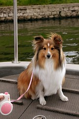 """First boat trip in Shepperton • <a style=""""font-size:0.8em;"""" href=""""http://www.flickr.com/photos/55880040@N05/5192787589/"""" target=""""_blank"""">View on Flickr</a>"""