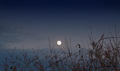 Hunters Moon (eyesontheskies) Tags: moon nature fullmoon moonrise
