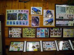 昆蟲生態館