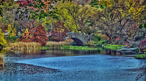 Central Park's Gastow Bridge surrounded by all the colors of the rainbow!