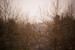 172. First Snow (prenetic) Tags: trees winter sky snow fall daylight apartments skies apartment earth balcony ground driveway redmond wa precipitation