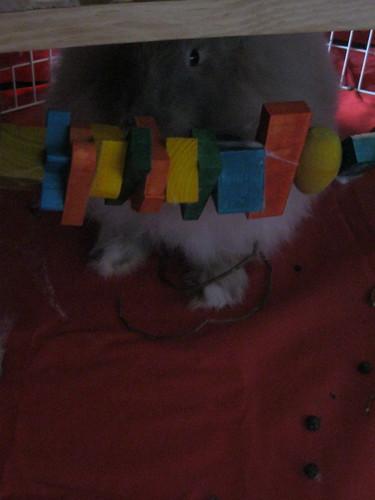 Timid Bunny