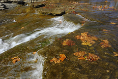 Fall Falls (thefisch1) Tags: water leaves waterfall leaf solitude creative kansas tranquil
