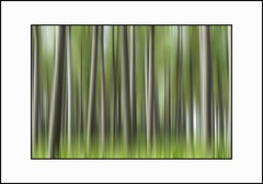 Pretty Green - Scottish Forest View (Magdalen Green Photography) Tags: trees abstract forest scotland scottish coolgreen prettygreen dsc0295 iaingordon scottishforestview