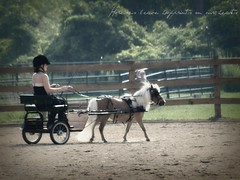 Horses leave hoofprints on our hearts (Emily Marie Photography) Tags: horse love driving western cart hoofprints