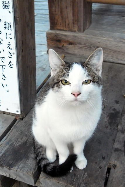 Today's Cat@2010-11-26