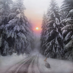 Lonesome Road (lunamom58) Tags: road trees winter sun snow rabbit photoshop landscape snowshoe hare digitalart creativecommons 333views boxofhappymemories