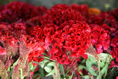 IMG_1321 (asadjaved) Tags: new india flower place market circus delhi mandi rajiv connaught chowk phool