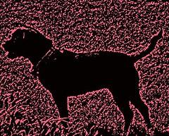 alert black dog 2
