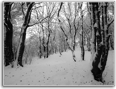 Snowy Copse (CWhatPhotos) Tags: olympus penn elp1 1442mm kit esystem four thirds digital camera cwhatphotos mzuiko zuiko lens pictures picture photo photos image images foto fotos that have which contain taken epl1 snow winter snowing snowy white sacriston county durham time north east cold freeze ice snowed england uk weather heavy deep prolonged november nov 2010 dec december pen olympuspen retro look blackandwhite blackwhite photography monochrome monochromed flickr
