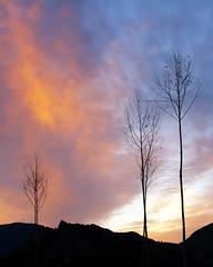 quien a buen árbol se arrima ... (Cani Mancebo) Tags: blue trees sunset españa orange tree yellow azul canon contraluz landscape rouge atardecer spain rojo árboles paisaje murcia amarillo árbol 1785mm naranja cartagena ocaso canon1785mm canon1785 400d canoneos400ddigital canon1785mmf456efsisusm canimancebo