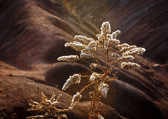 Golden Sunlight (A Great Capture) Tags: sunlight sunshine golden trail badlands cheltenham ald ash2276 ashleyduffus ald ashleysphotographycom ashleysphotoscom ashleylduffus wwwashleysphotoscom