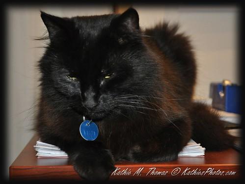 27-365, Smokey the cat