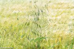 P50_5673-16 (pavelkricka) Tags: holbrook multiple exposure