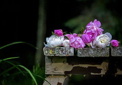 (donna leitch) Tags: flowers peonies table weathered moody outdoors garden picnictable donnaleitch